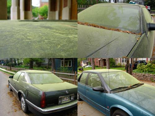 Atlanta Pollen Count